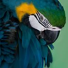 Macaw by Houndstooth