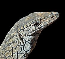 Disdainful Perentie by bazcelt