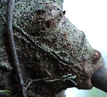 a head-like smoking face from a tree trunk by mariatheresa