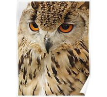 Jambs Parliament of Owls, Israeli Eagle Owl Poster