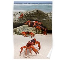 Red Crabs Poster
