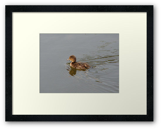Duckling by Kathi Arnell