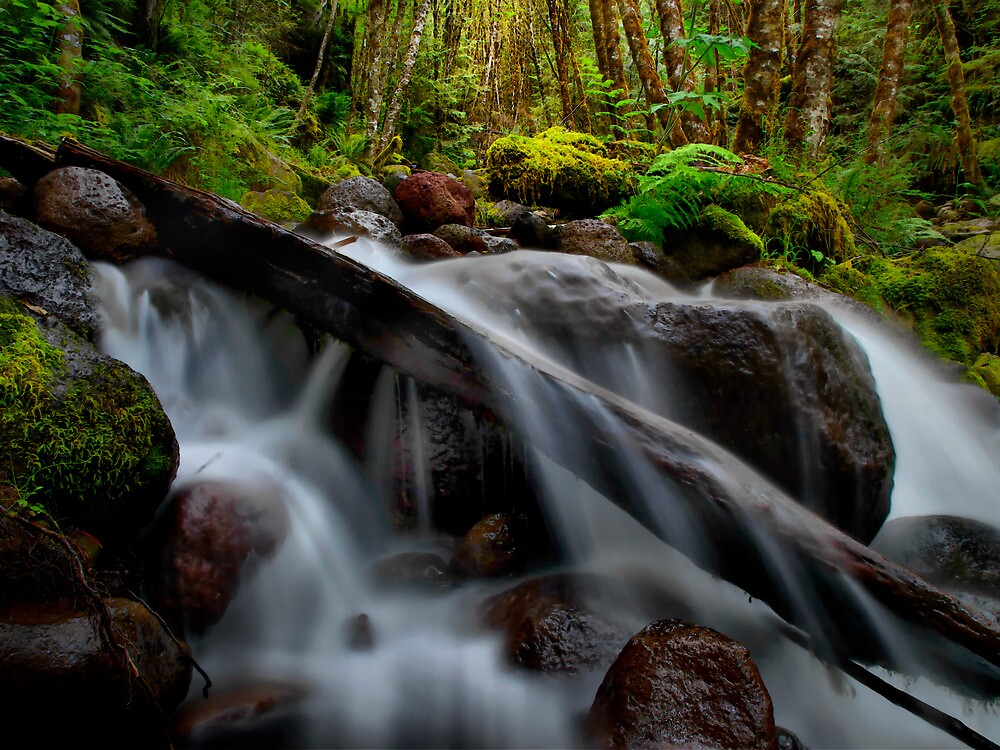 Falls At Canyon Creek by Charles & Patricia   Harkins ~ Picture Oregon