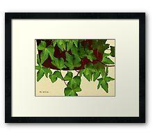 Ivy in Russet Pot Framed Print