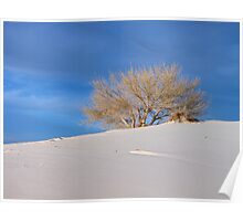 One Tree Dune, White Sands N.M. Poster