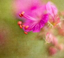 Wisp of Spring by Sharon Johnstone