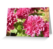 magenta flowers Greeting Card