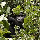 gorillas in the bush by gruntpig