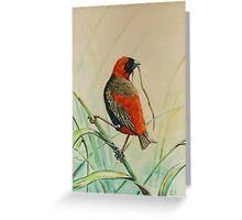 Moms Bird Greeting Card