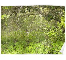 Old Oak Undergrowth Poster