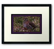 The Red Legged Partridge Framed Print