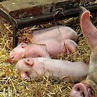 Millie's Pigglets by Simon Duckworth