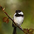Birds of Quinte II by Renee Dawson