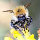 taste of honey by webbo