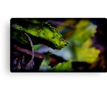 yellowed Canvas Print