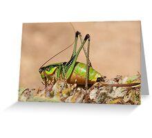 Decticus verrucivorus - Greek Wart Biter Cricket Greeting Card