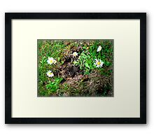 summers here! Framed Print