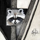 Raccoon by Chehade