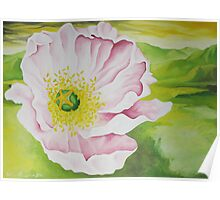 Pink California Poppy Poster