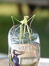 Praying Mantis on a Water Fountain Spout by elasita