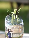 Praying Mantis on a Water Fountain Spout by elasita