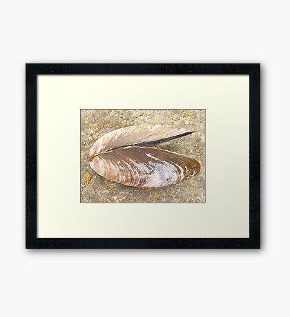I need bigger mussels!! Framed Print