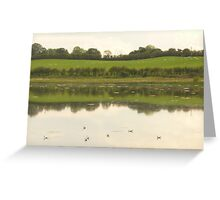 Come on in the water is lovely! Greeting Card