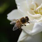 The Gardenia Visitor by Linda Fury