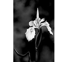 Wild Iris - Black & White Photo Painting Photographic Print