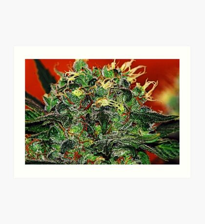 BIG BUD Art Print