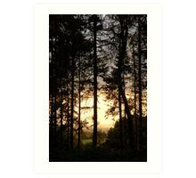 Summer Evening Woods Art Print