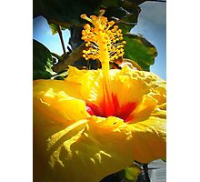 Earth laughs in flowers. ~ Ralph Waldo Emerson Photographic Print