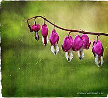 Bleeding Hearts by AdornmentPhotog