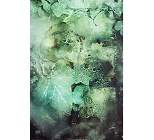 295 Poison Ivy Photographic Print