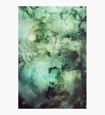 295 Poison Ivy Photographic Print