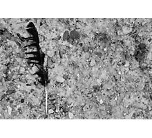 Feather Photographic Print