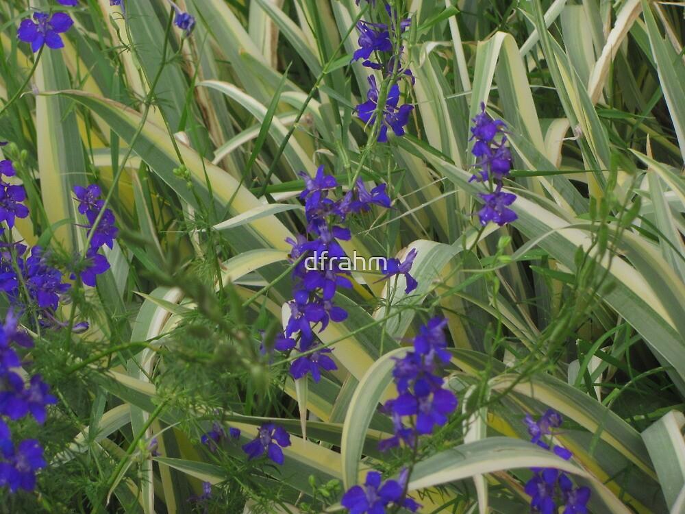 """""""Purple Flowers"""" by dfrahm"""