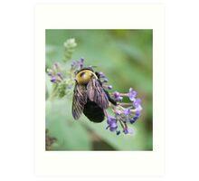 Bee-utiful Bee! Art Print