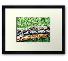 Contrast in Nature Framed Print