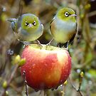 Who&#x27;ll Stop the Rain From Falling Down On Us? - Silvereyes-NZ by AndreaEL