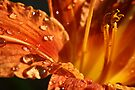 Lily After The Rain by Rhonda Blais