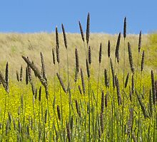 Wild Grass Hills by RFA-Photography