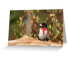 Rose-breasted Grosbeak (male) Greeting Card
