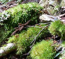 Moss on the forest floor by Elisabeth  Cannell