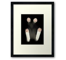 cat inside things Framed Print