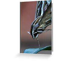 Striped Hawk Moth 2 Greeting Card