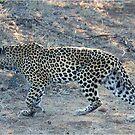 SO CLOSE ! The Kruger National Park, South Africa by Magaret Meintjes
