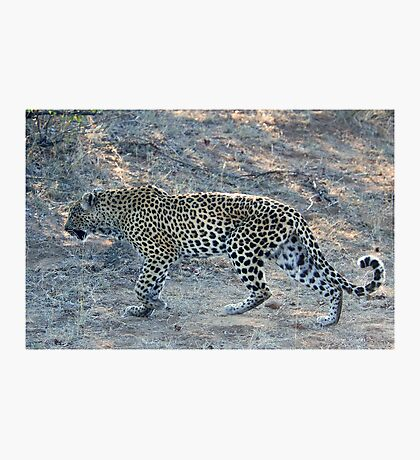 SO CLOSE ! The Kruger National Park, South Africa Photographic Print