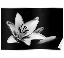 Black & White Lily Poster