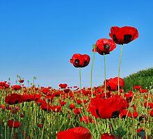 Poppies by Adri  Padmos